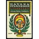 Havana Pflänzchen Cigarillo Mild Fein Würzig